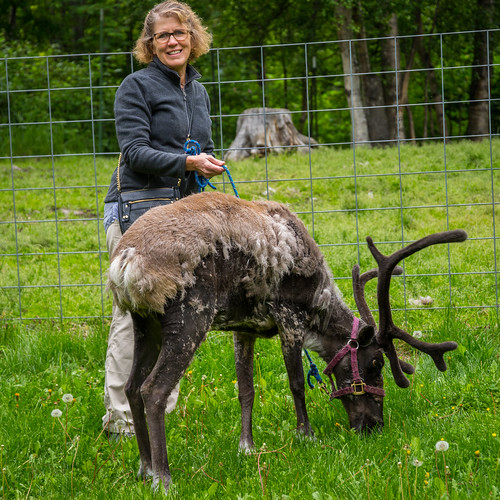 Pet Reindeer at Agate Inn, Wasilla