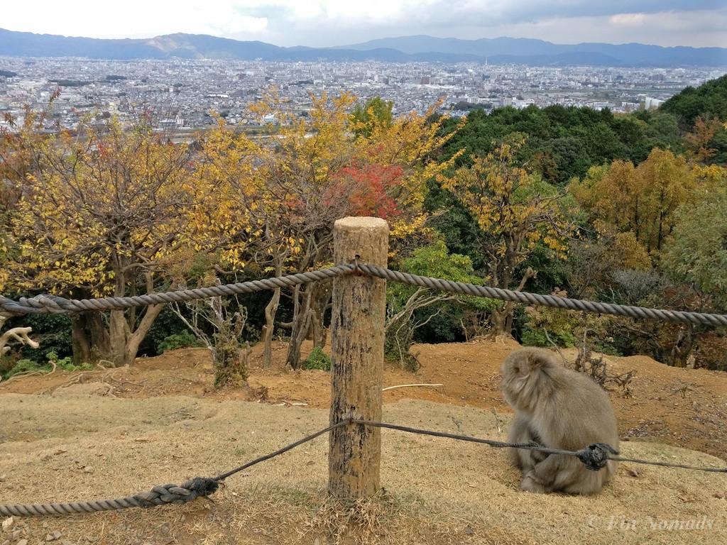 Arashiyama kyoto monkey 2