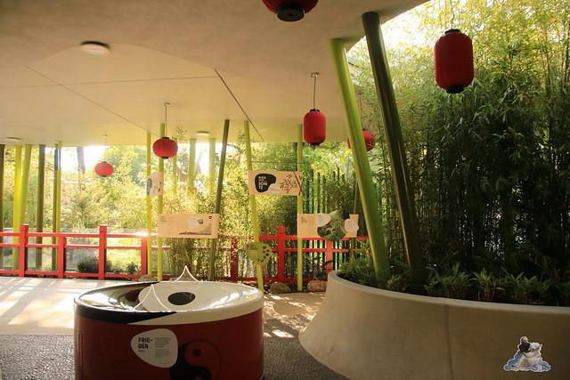 Panda Meng Meng und Jiao Qing im Berliner Zoo 082