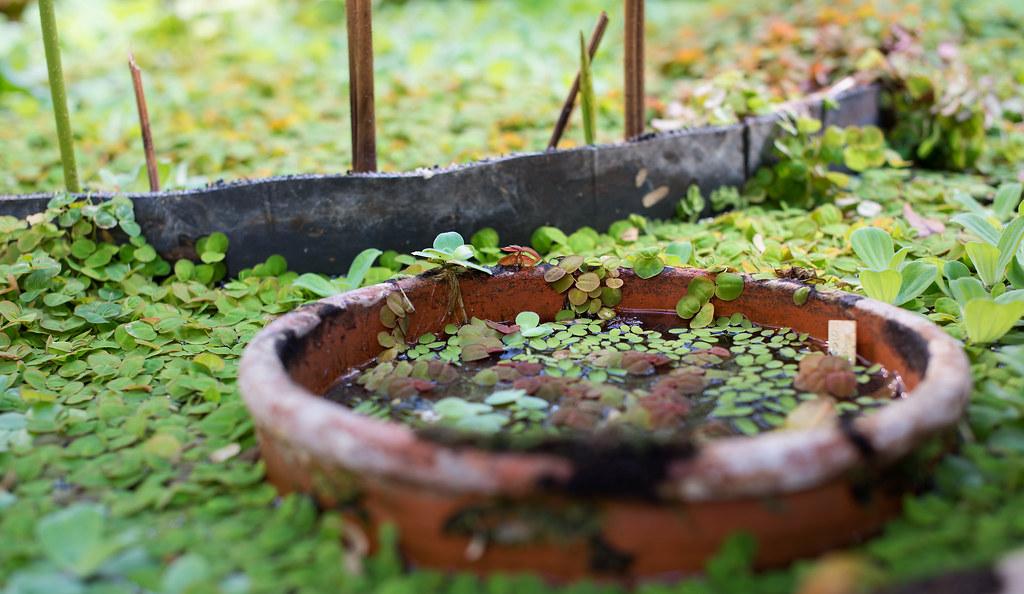 botanisk hage 04