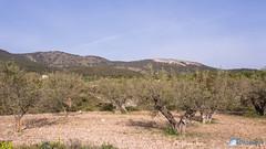 Bodega Cooperativa de Castalla-57