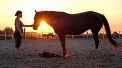 Brinda's Horses