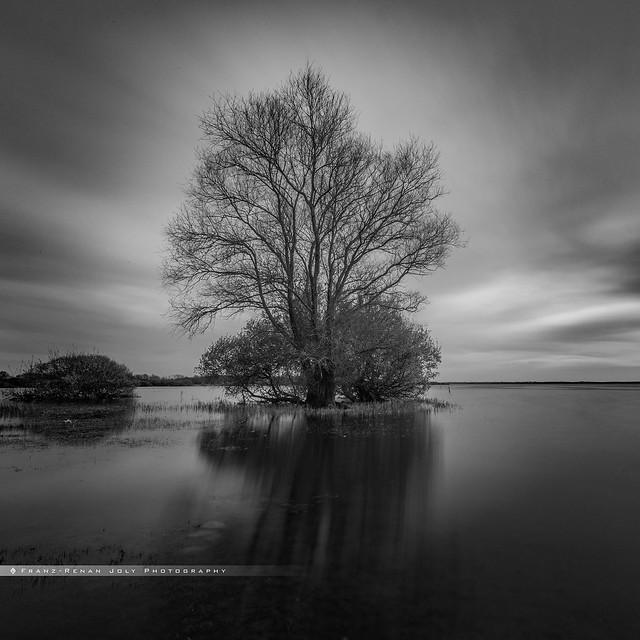 - l'arbre de grand lieu -