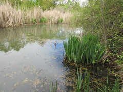 A very wet wetland