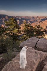 NAdja at the Grand Canyon