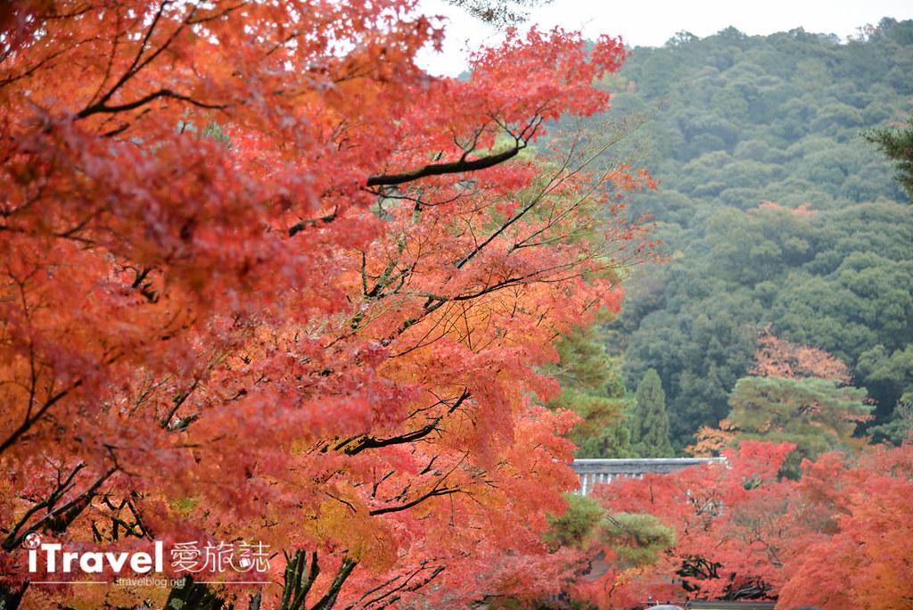 京都赏枫景点 永观堂 (5)