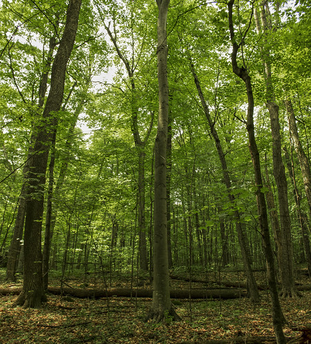 Kurtz Woods State Natural Area
