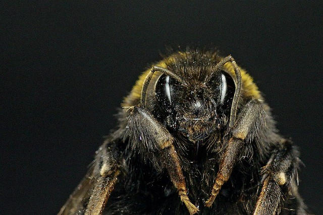 365 - Image 173 - Bee macro...