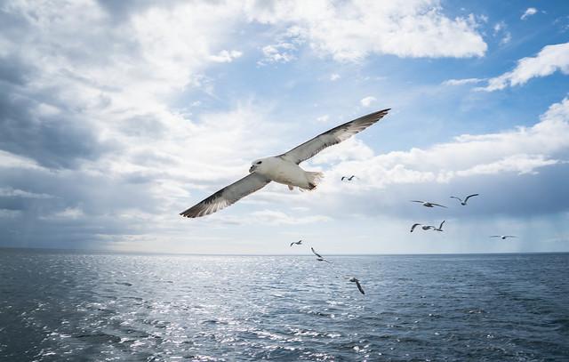 Seagulls at Reykjavik Port, Iceland