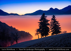 Switzerland - Jura Mountains - Juragebirge - Frozen winter snowy landscape submerged in sea of fog at Dusk