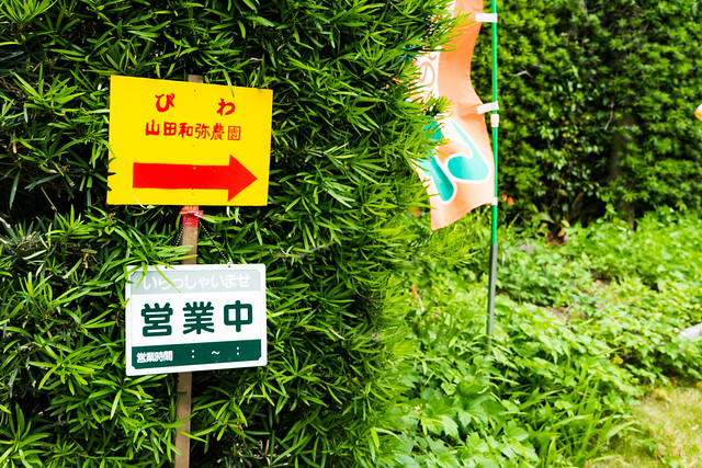 房州びわ狩り@山田和弥農園-1.jpg