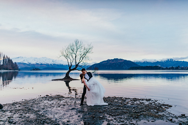 New Zealand, South NZ, Lake Wanaka, That Wanaka Tree