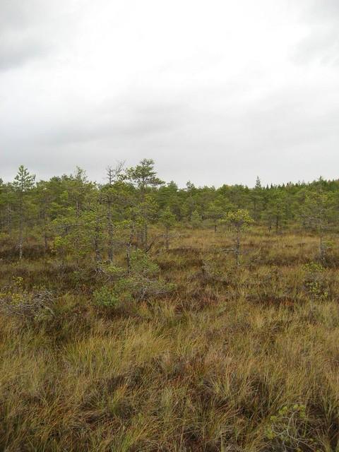 Valkmusan kansallispuisto 0916-13_zpscyxry26f
