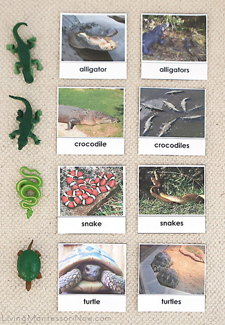Reptile Singular and Plural Sorting