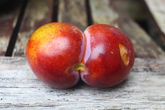 Siamese Plum - Top View (Single Stalk)