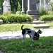 Congressional Cemetery Jun 10, 2017, 11-41 AM_sharing by krossbow