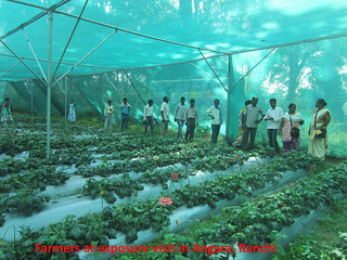 Proyecto Dalmadih (India) (9)