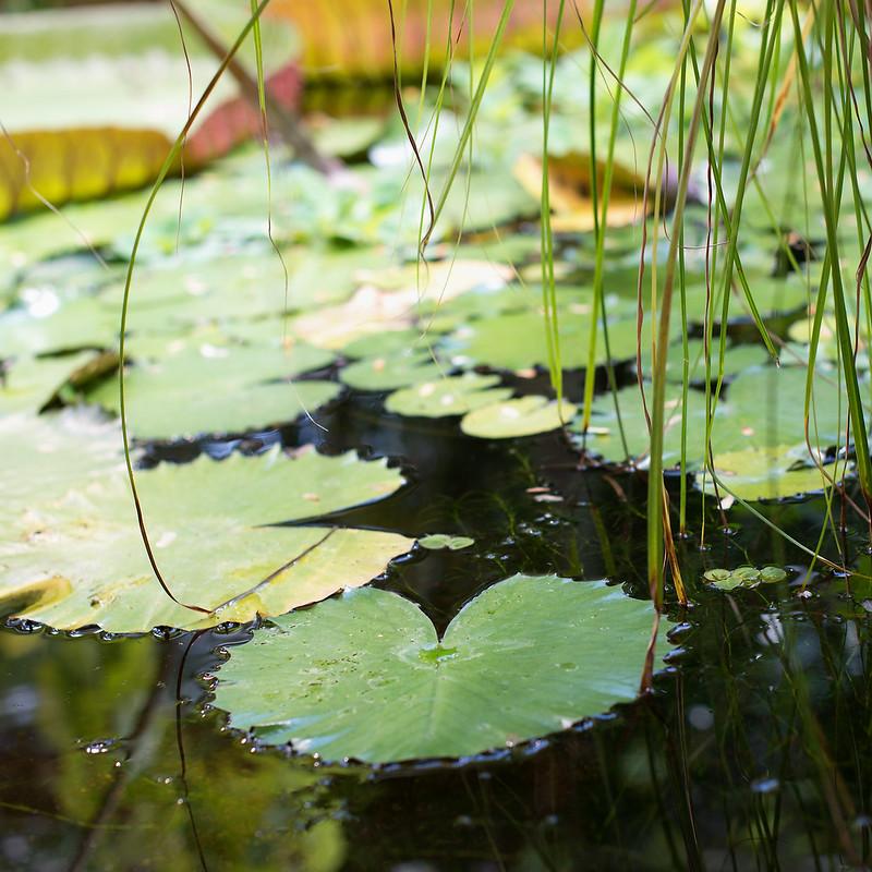 botanisk hage 06