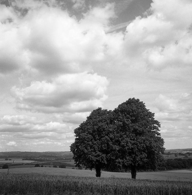 FILM - Below the meadow