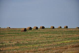Lithuanian landscape
