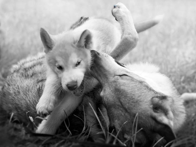 heart- warming friendship