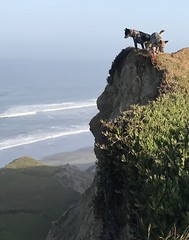 This morning at Fort Funston