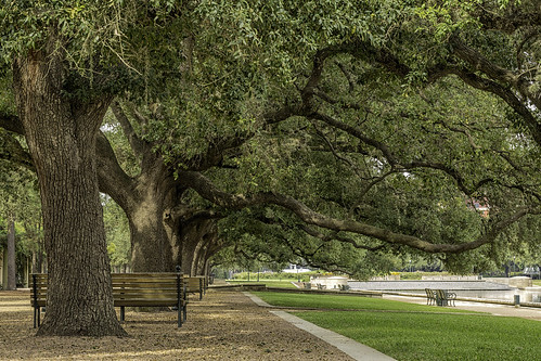 2015 harriscounty hermannpark houston mabrycampbell october texas usa unitedstatesofamerica benches fineartphotography green image landscape leaves oaktrees park photo photograph photographer photography tree trees f11 october82015 20151008h6a1968edit 100mm ¹⁄₁₅sec 100 ef100mmf28lmacroisusm fav10 fav20 fav30 fav40 fav50