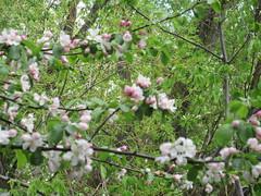 Wetland blooms