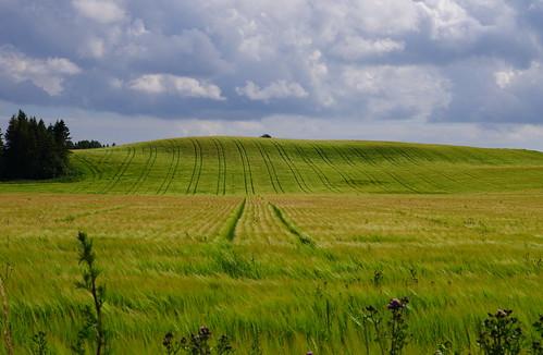 sigmaex1850mmf28 österlen hagestad fyledalen sweden sverige skåne landskap landscape