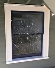 Windows+Web