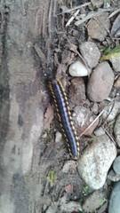 Centipede or Millipede