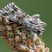 Owlet moth - Vlasbekuiltje by andredekesel