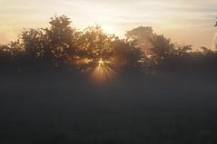 Sonnenaufgang über den Rinderweiden; Bergenhusen, Stapelholm (85)