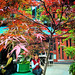 Small photo of Japanese Maple in Neal's Yard