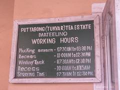 Working Hours - Jayshree's Tea Factory & Puttabong Tea Garden - Darjeeling West Bengal India