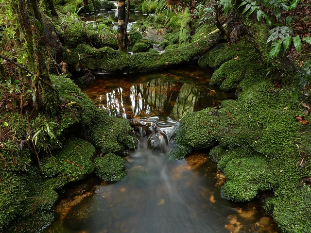 Mossy Creek in the Kawhaka Forest