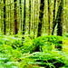 4june, woodland near lampeter.