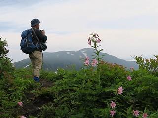 ヒメサユリ咲く小さなピークで浅草岳を展望