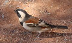 Namibia - Birds