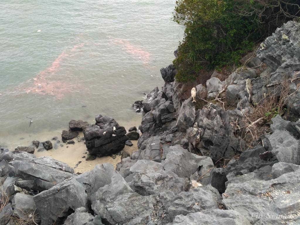 Monkey island halong bay 4