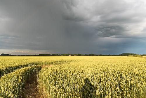 mākoņi varavīksne lietusmākoņi kviešulauks