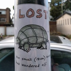 Tortoise on the run in @whampstead / NW6. Noted down the number too if you happen to find one tortling around the neighborhood. (Not my tortoise).
