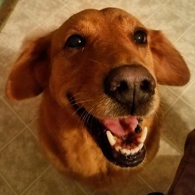 Happy Dog !