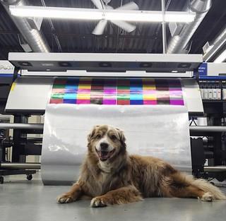 Dogs like graphics too!