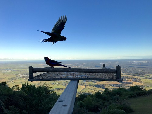 Bird watching at Cambewarra lookout