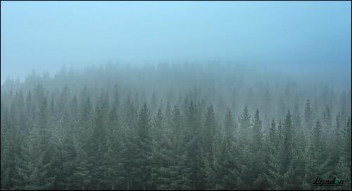 week222017 52weeksthe2017edition weekstartingsundaymay282017 newzealand nature nz weather wairarapa forest fog winter seasons