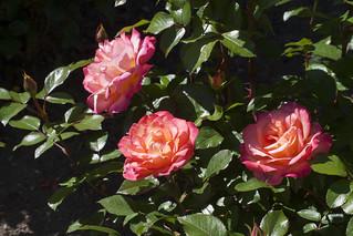Brookside Gardens  (51)