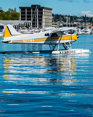 Beaver Reflected in Lake Union