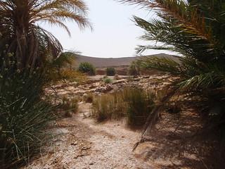 Oasis en Merzouga, Marruecos