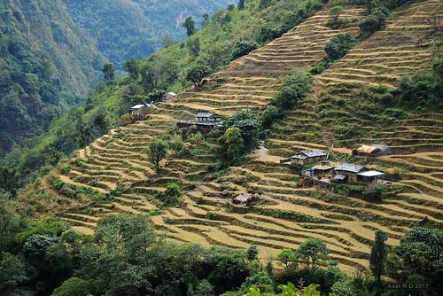 bâtimentmaison champs montagnes nepal terrasseterrasses